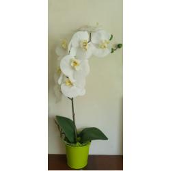 Grande orchidée blanche